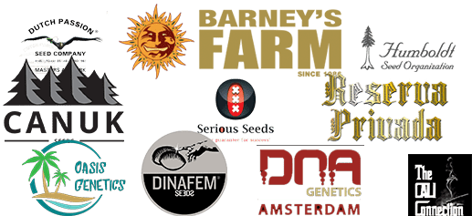 Buy cannabis seed from Barney's Farm, DNA Genetics. Reserva Privada, Cali Collection, Green House Seed Co. and many other breeders.