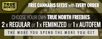 Free Marijuana Seeds with Every Order